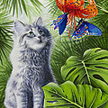 Curious Kiwi Poster by Carolyn Steele