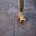 Curious Squirrel Print by Michele Stoehr