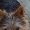 Cutest Dog Ever - Animal - 01133 Print by DC Photographer
