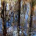 Cypress Reflection Nature Abstract Print by Carol Groenen
