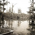 Cypress Swamp Print by Scott Pellegrin