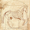 da Vinci Horse in Piaffe Poster by Catherine Twomey