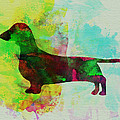 Dachshund Watercolor Print by Irina  March