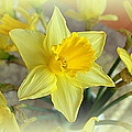Daffodil Poster by Bishopston Fine Art