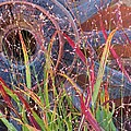 Dance of the Wild Grass Print by Feva  Fotos