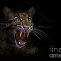 Deceptive Expressions Poster by Ashley Vincent