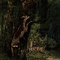 Deer in the Forest Poster by Gustave Courbet