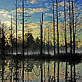 Devils Den in The Pine Barrens Print by Louis Dallara