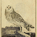 Die Stein Eule or Church Owl Poster by Unknown Artist