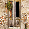 Dilapidated Brown Wood Door of Portugal Poster by David Letts