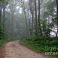 Dirt Path in Forest Woods with Mist Poster by Olivier Le Queinec