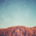 Distant Moon Print by Lupen  Grainne