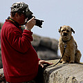 Dog Being Photographed Print by Terri  Waters
