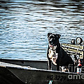 Dog Gone Fishing Print by Peggy  Franz