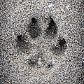 Dog paw print in sand Poster by Elena Elisseeva
