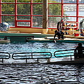 Dolphin Show - National Aquarium in Baltimore MD - 1212107 Print by DC Photographer