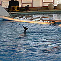 Dolphin Show - National Aquarium in Baltimore MD - 1212142 Poster by DC Photographer