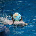 Dolphin Show - National Aquarium in Baltimore MD - 1212155 Poster by DC Photographer