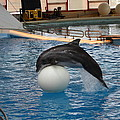 Dolphin Show - National Aquarium in Baltimore MD - 1212160 Poster by DC Photographer