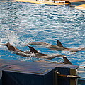 Dolphin Show - National Aquarium in Baltimore MD - 1212187 Print by DC Photographer