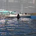 Dolphin Show - National Aquarium in Baltimore MD - 121219 Print by DC Photographer