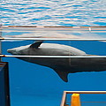 Dolphin Show - National Aquarium in Baltimore MD - 1212198 Print by DC Photographer