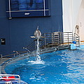 Dolphin Show - National Aquarium in Baltimore MD - 1212200 Print by DC Photographer