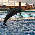Dolphin Show - National Aquarium in Baltimore MD - 1212212 Poster by DC Photographer