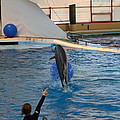 Dolphin Show - National Aquarium in Baltimore MD - 121239 Print by DC Photographer