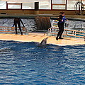 Dolphin Show - National Aquarium in Baltimore MD - 121246 Print by DC Photographer