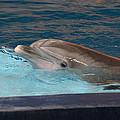 Dolphin Show - National Aquarium in Baltimore MD - 121261 Poster by DC Photographer