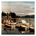Domino at Alderbrook on Hood Canal Print by Jack Pumphrey