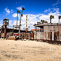 Dory Fishing Fleet Market in Newport Beach California Print by Paul Velgos