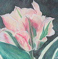 Double Tulip Print by Cathy Lindsey