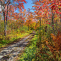 Down the Autumn Road Poster by Bill  Wakeley