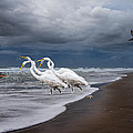 Dreaming of Egrets by the Sea II Print by Betsy A  Cutler