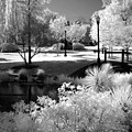 Dreamy Surreal Black White Infrared Landscape Print by Kathy Fornal