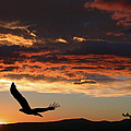 Eagle at Sunset Print by Shane Bechler