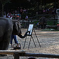 Elephant Show - Maesa Elephant Camp - Chiang Mai Thailand - 011344 Poster by DC Photographer