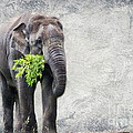 Elephant With A Snack Print by Tom Gari Gallery-Three-Photography