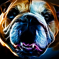 English Bulldog - Electric Print by Wingsdomain Art and Photography