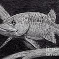 Esox Masquinongy Poster by Larry Green