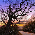 Evening Tree Print by Debra and Dave Vanderlaan