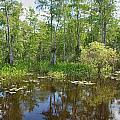 Everglades Lake Print by Rudy Umans