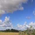 Everglades Landscape Panorama Print by Rudy Umans