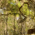 Fabulous Spanish Moss Poster by Christine Till