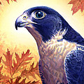 Falcon Print by Alan  Hawley
