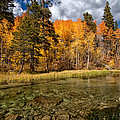 Fall Along Bishop Creek Print by Cat Connor