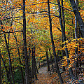 Fall Foliage Colors 03 Print by Metro DC Photography