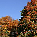 Fall Foliage in the Arboretum Print by Natural Focal Point Photography
